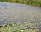 rekreacja-ogrodnictwo-sport-stawy-rybne-2